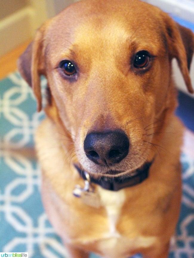 Bliss Dog turns 7 on UrbanBlissLife.com