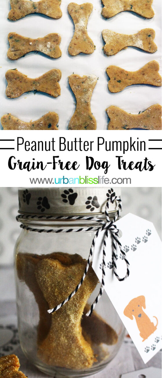 mason jar gift of peanut butter pumpkin dog treats with title text