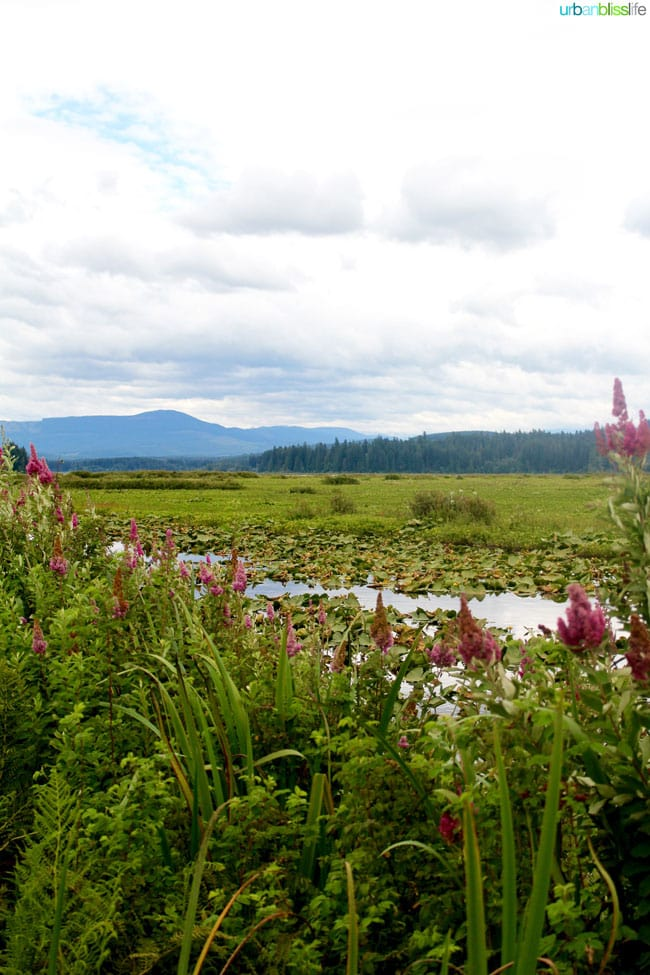 Mount Saint Helens Travel - Summer's End on UrbanBlissLife.com