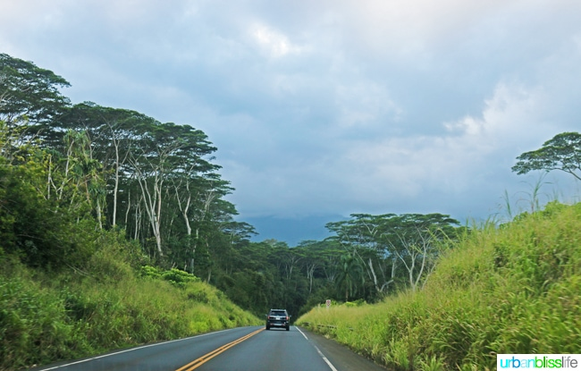 road surrounded by lush trees in Kauai, Hawaii
