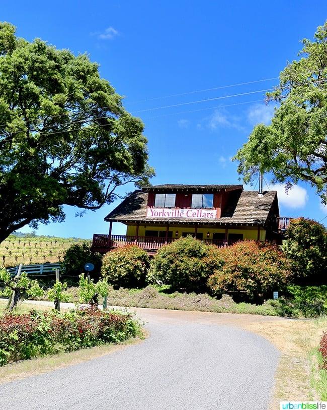 alexander valley wineries: yorkville cellars