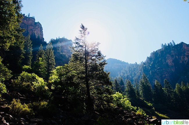 Colorado hiking forest mountains