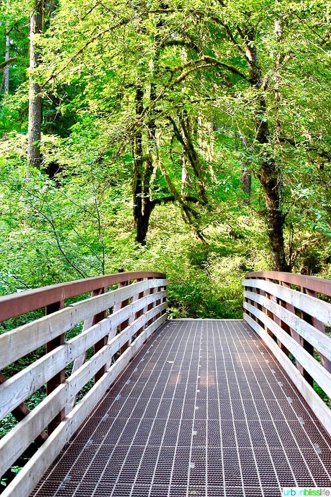 big bridge in Silver Falls State Park