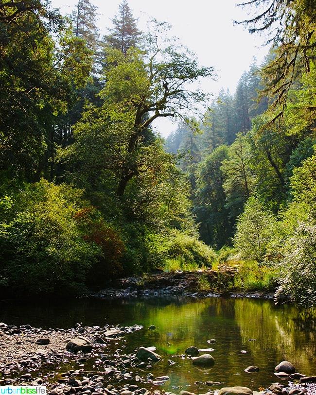 pretty Oregon at Silver Falls State Park