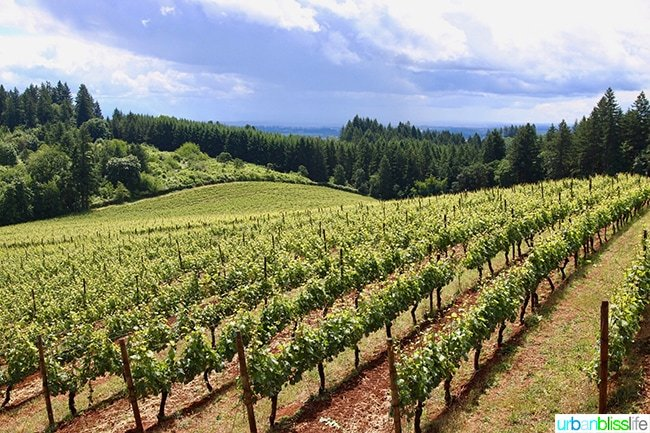 Lange Winery vineyards