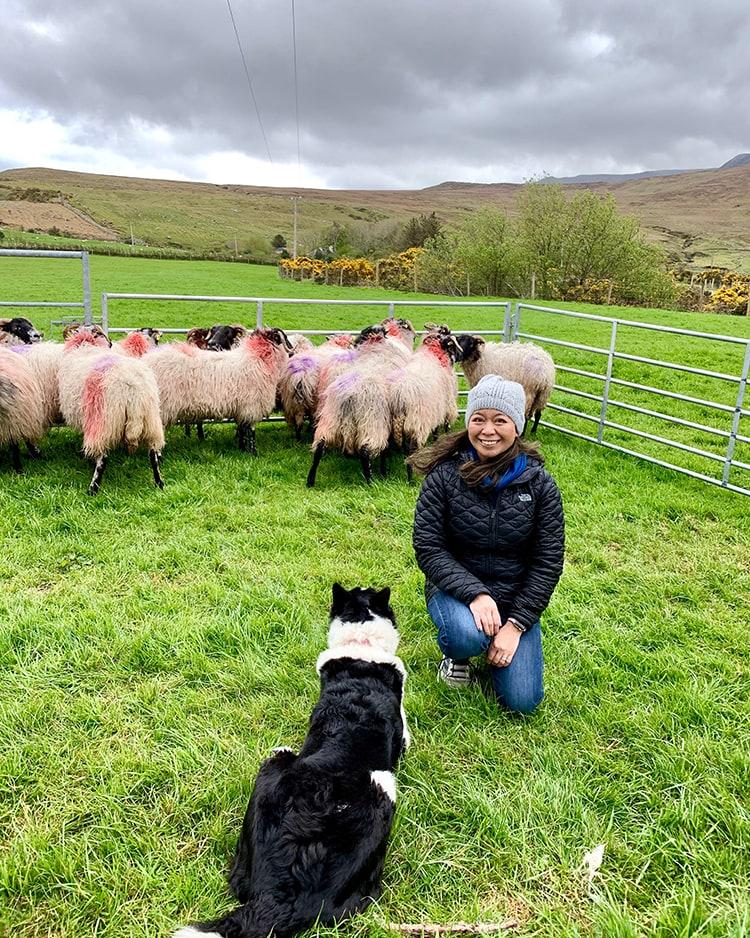 Glen Keen Farm Marlynn Dog Sheep Herding