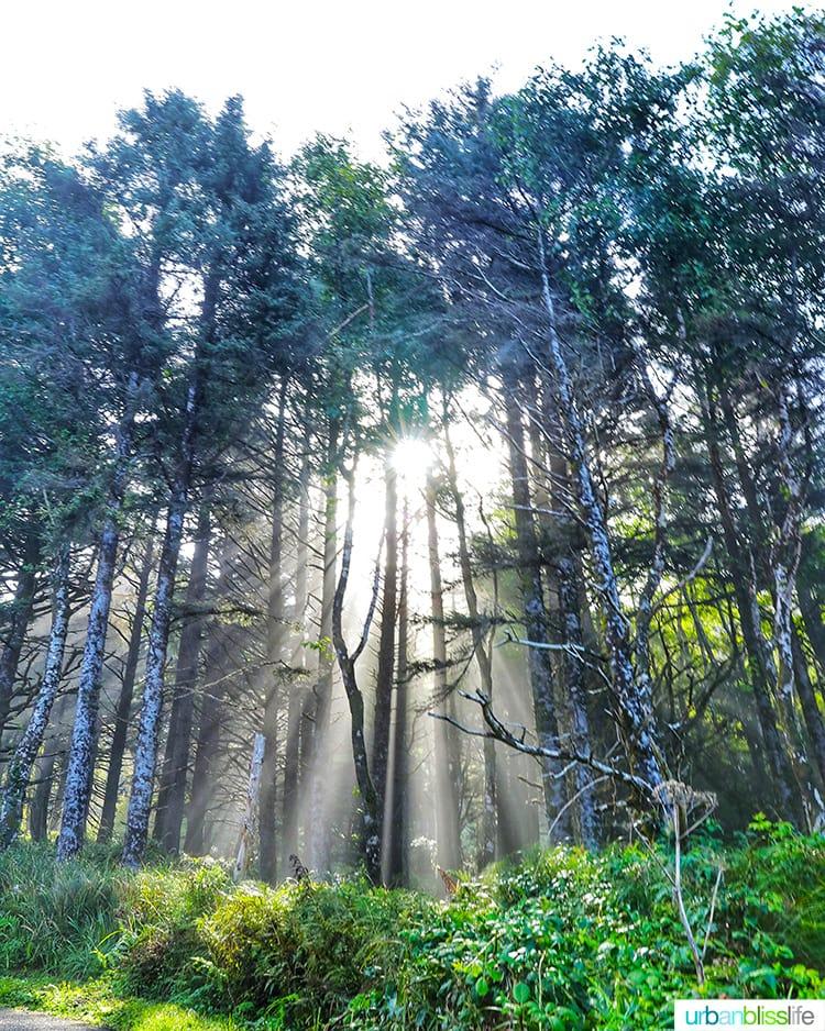 sunlight trees Hug Point Cannon Beach