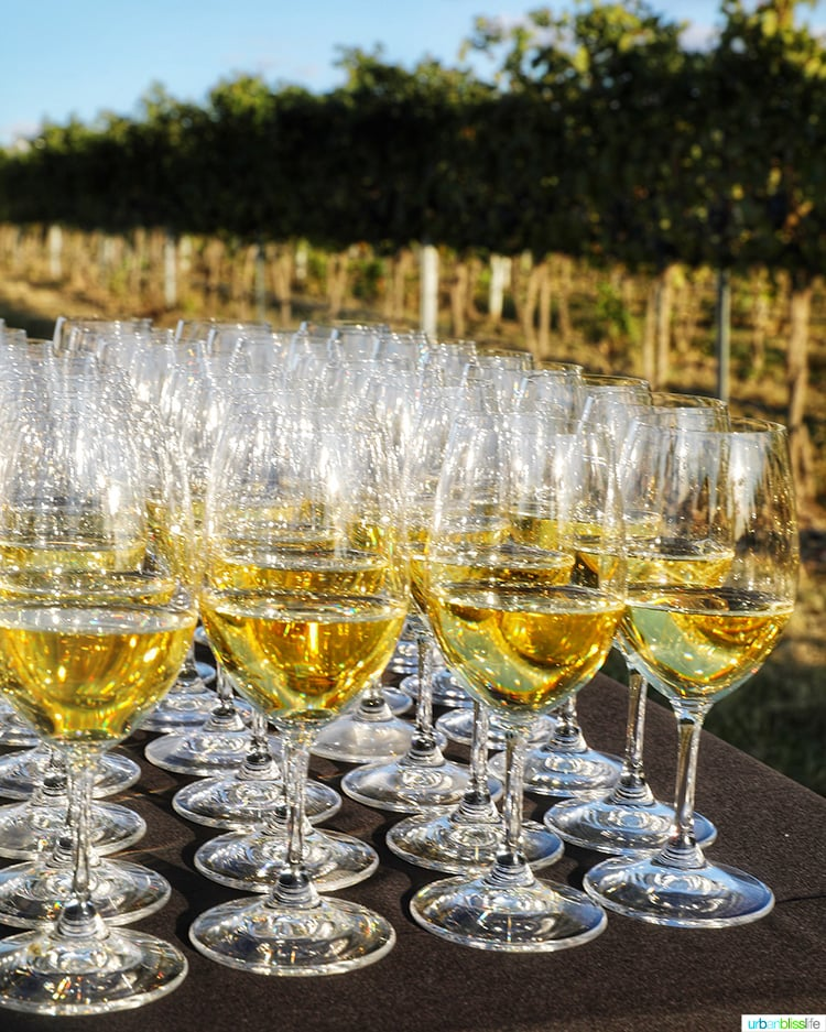 white wine glasses lined up at harvest celebration dinner walla walla vineyard