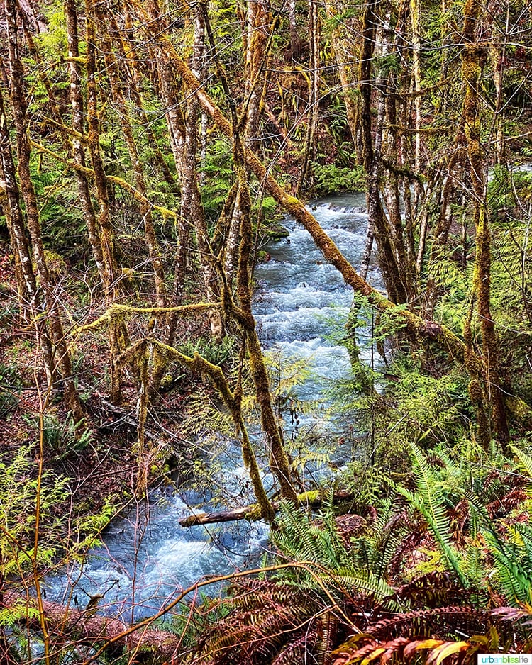 Oregon creek and forest