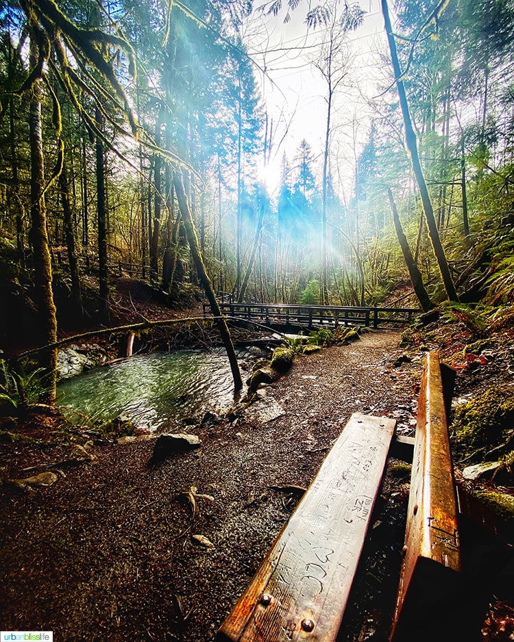bench and sunshine at Susan Creek Falls