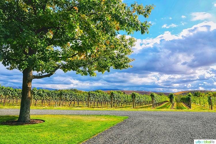 walla walla vintners vineyard