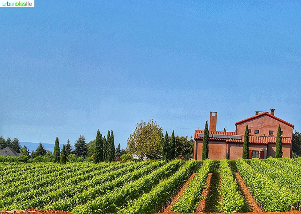 beautiful Alloro vineyard