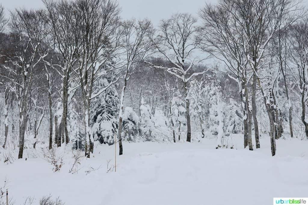 snowy winter scene outside my window at Hotel Jogakura