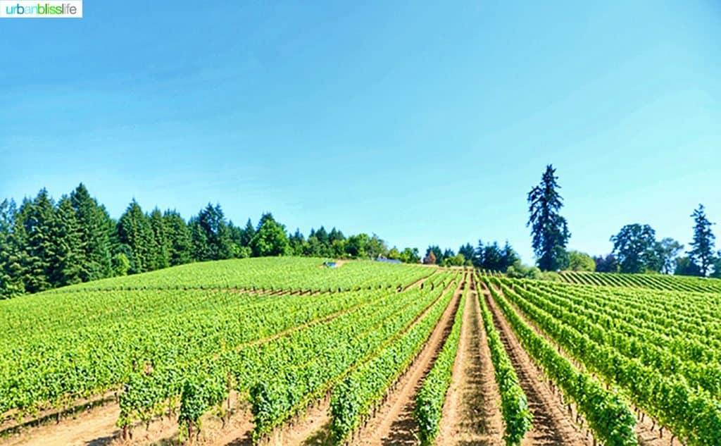 Lenné Estate south slope vineyard