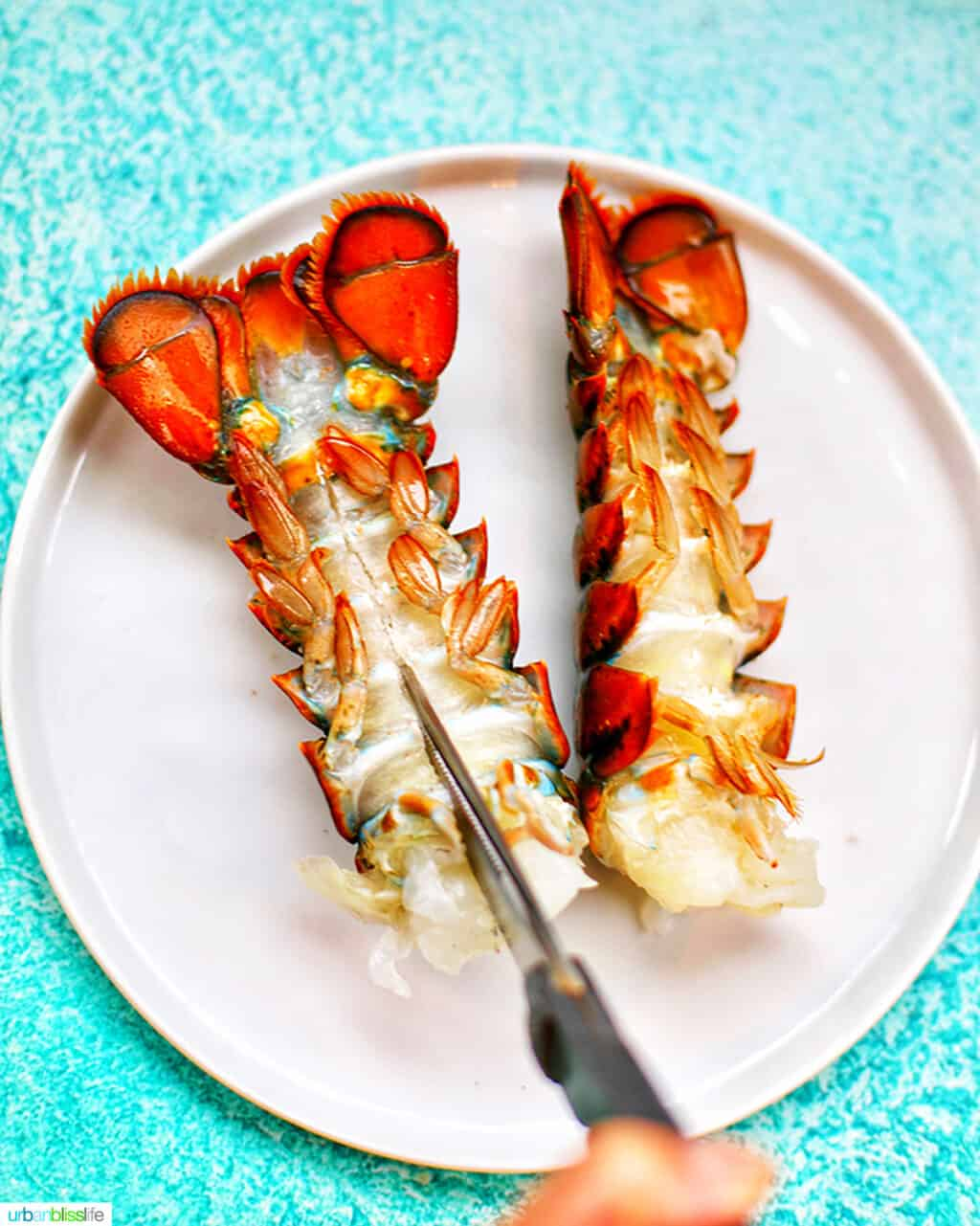 cutting lobster tails on a white plate against a blue background